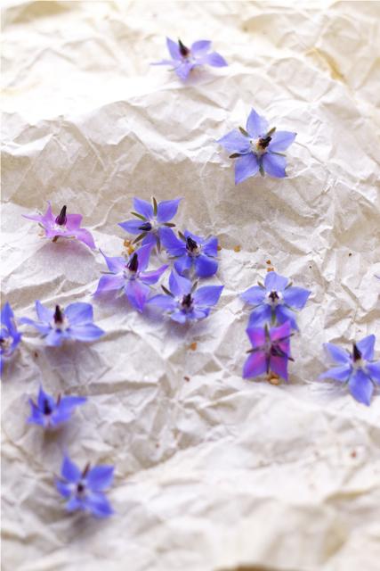 fiori di borragine