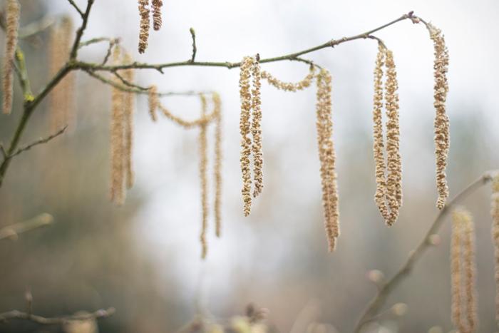 Buchteln sul comodino… o in giardino