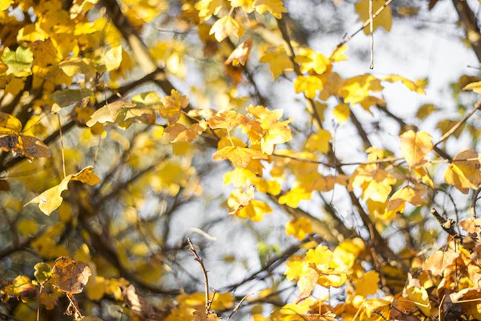 foglie di ponte milvio