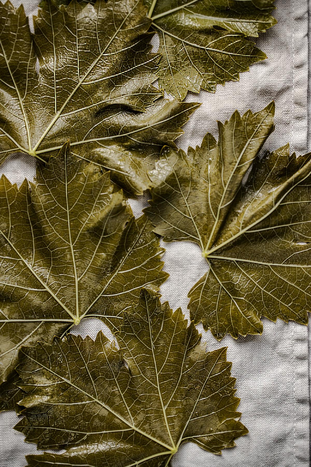 foglie di vite