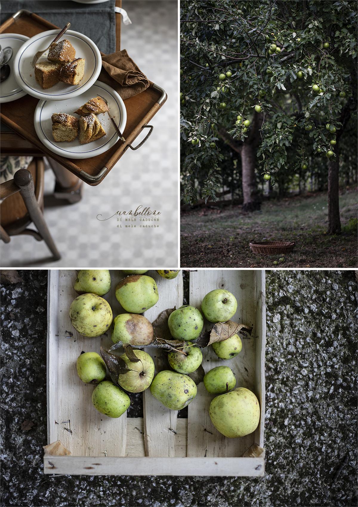 Ciambellone di mele caduche