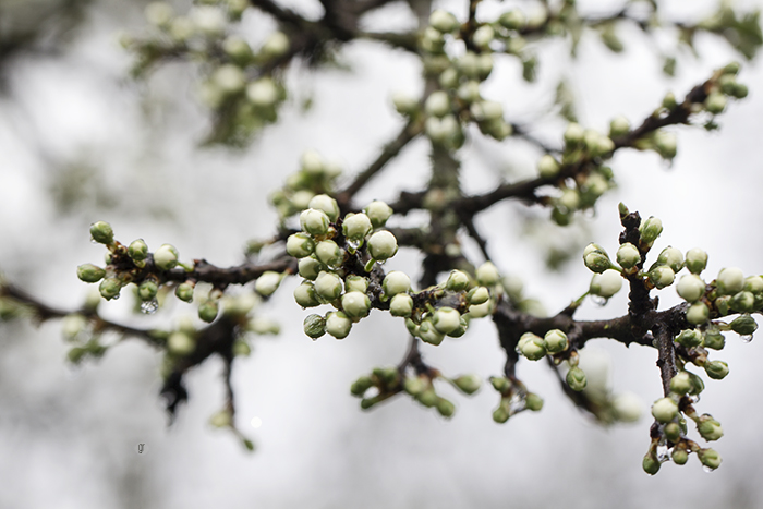 pane con noci e uva fragola